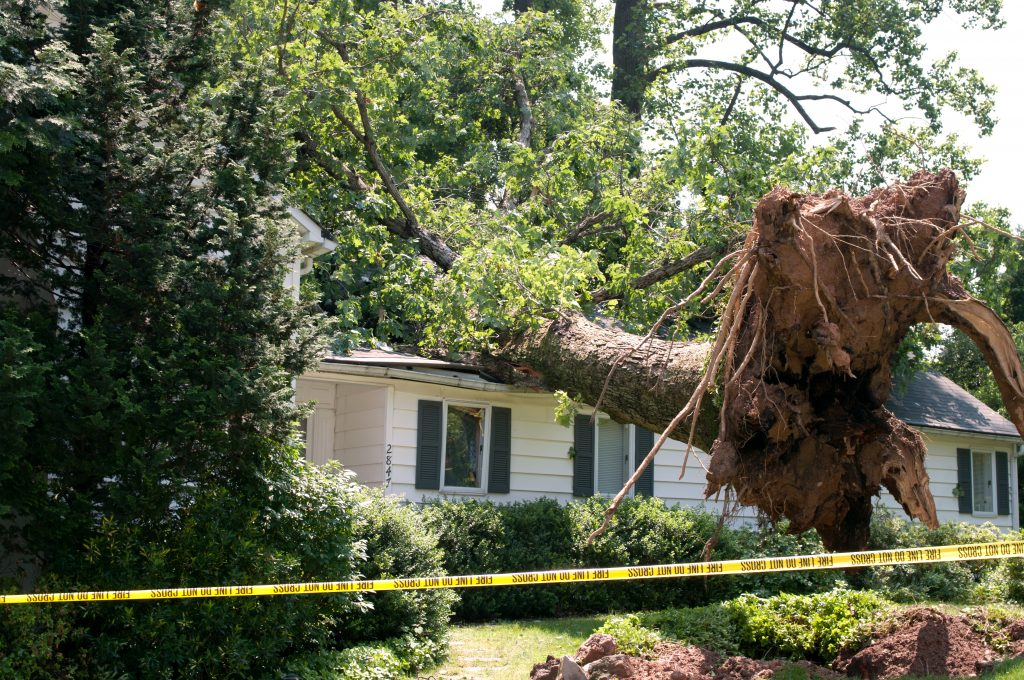 Uprooted Tree Fell on a House After a Serious Storm