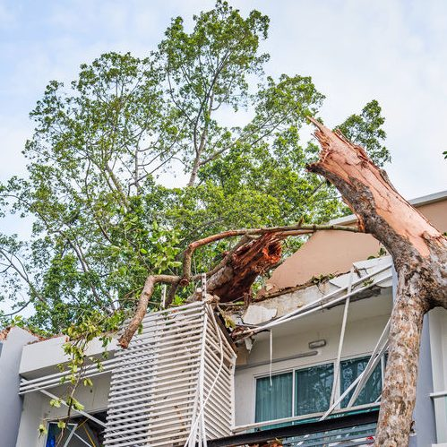 Damaged Building by Fallen Tree After Wind Storm
